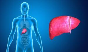 1 / 1 La grasa que se acumula en el hígado produce esteatosis hepática. / Fotolia