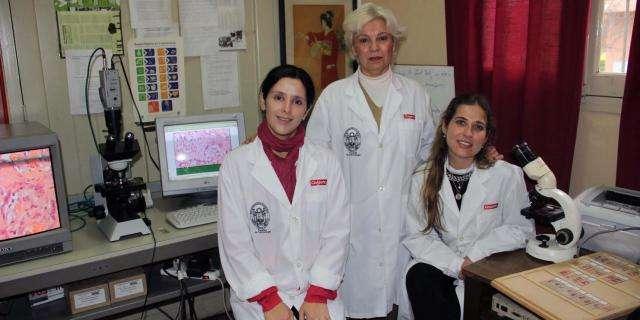 Crean un biomaterial innovador para regenerar hueso a partir de la combinación de proteínas