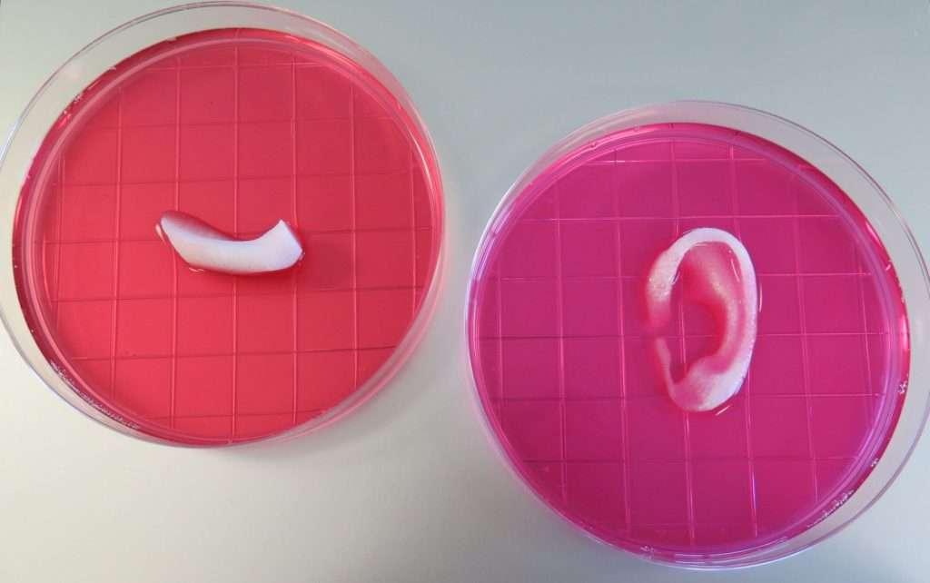 Porción de una mandíbula y oreja impresas con el sistema ITOP   Wake Forest Institute for Regenerative Medicine