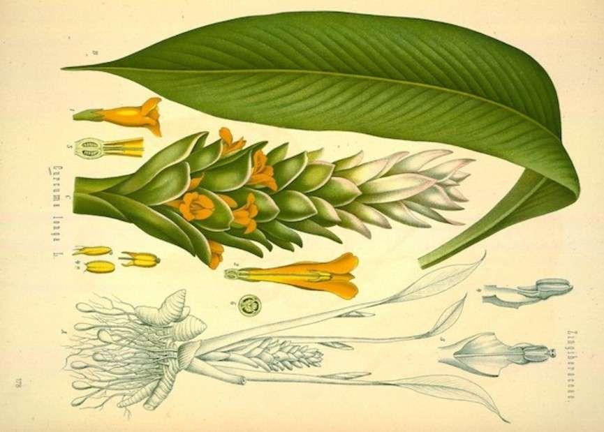 Biodiversity Heritage Library / flickr