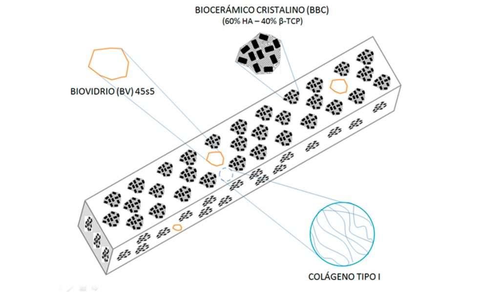 Científicos argentinos crean biomaterial para la regeneración del tejido óseo
